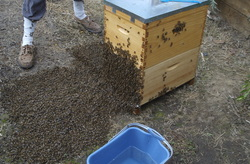 how to get the last honey out of extractor